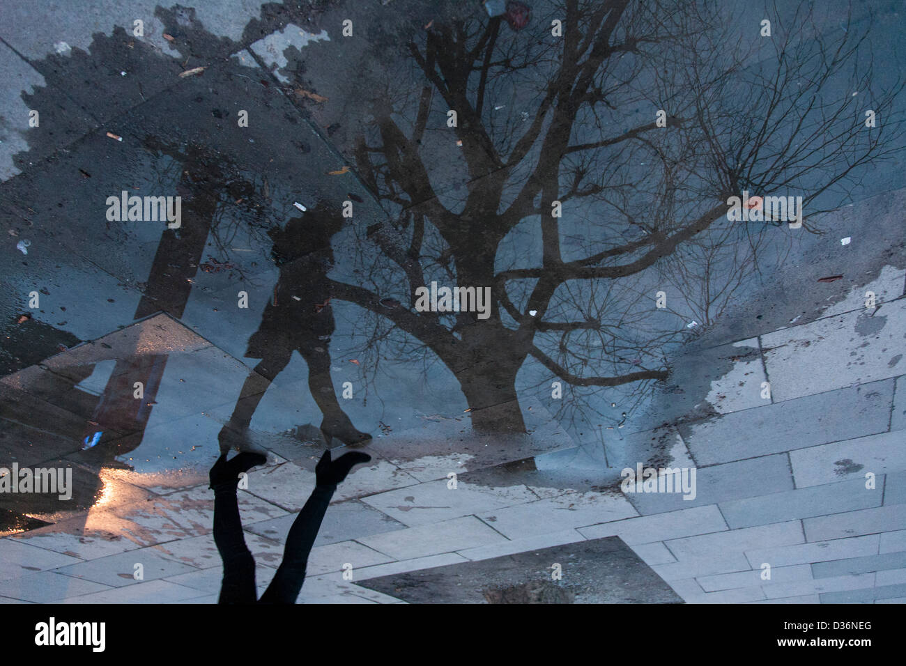 Reflection in puddle on pavement of woman walking next to tree at twilight - Stock Image