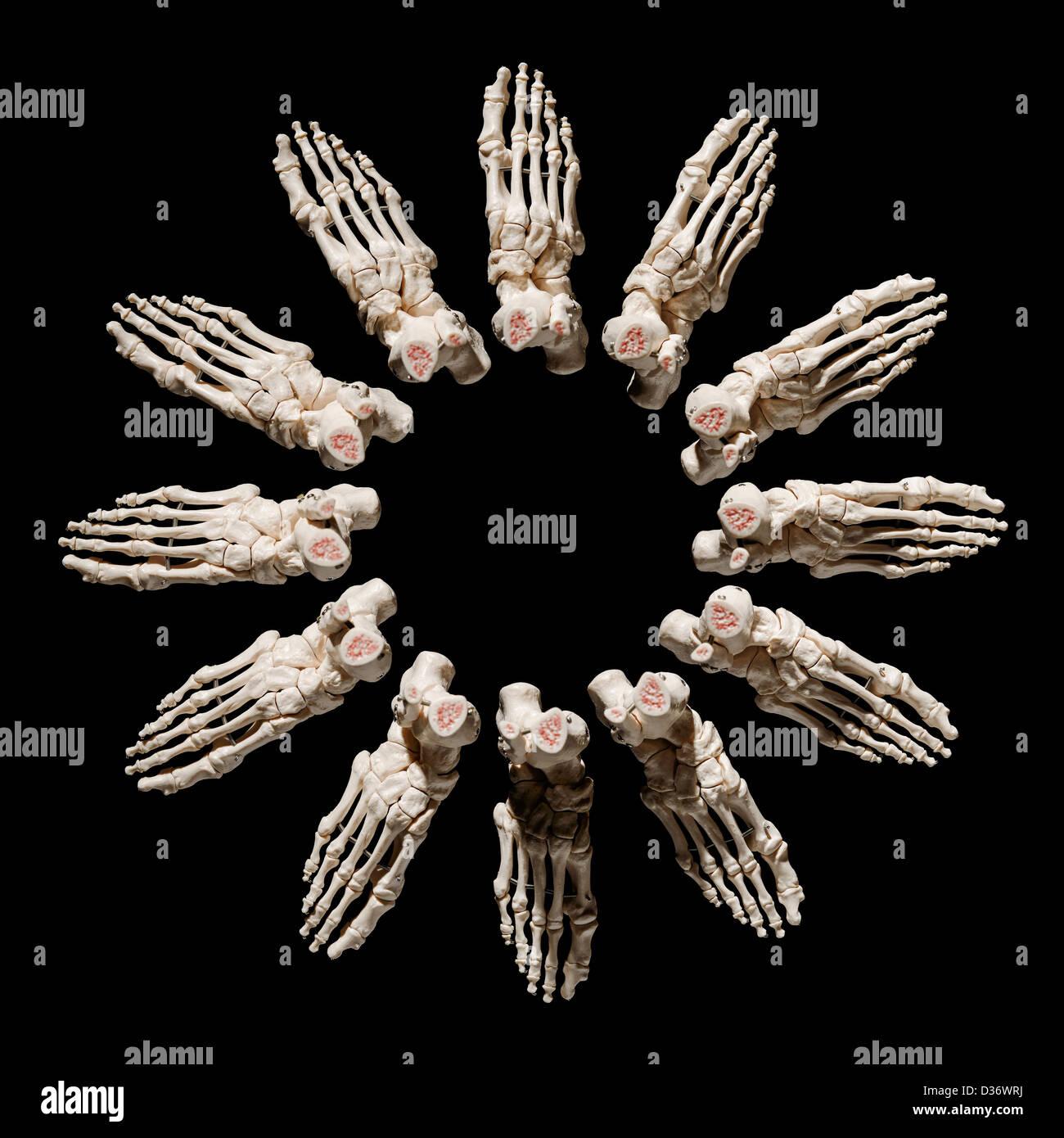 Twelve Skeleton Feet In A Circle Stock Photo 53627046 Alamy