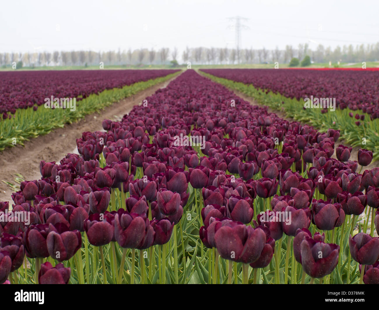 Agriculture Flowers Trees Spring Purple Crop Stock Photos