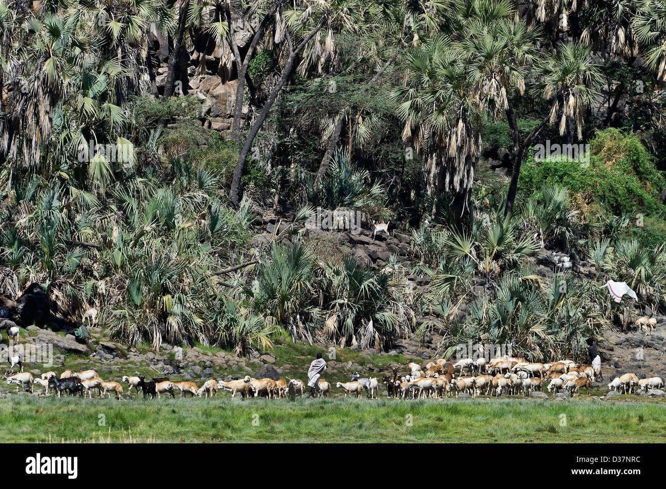 Afar shepherds leading their flock to pasture, Awash NP, Ethiopia - Stock Image