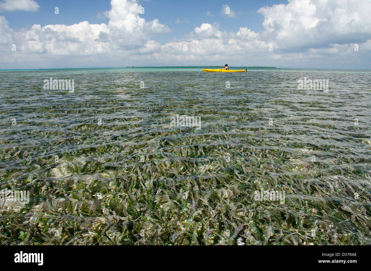 Belize, Caribbean Sea, Southwater Cay. Kayaking in the clear waters off the coast of Southwater Cay, shallow water - Stock Image