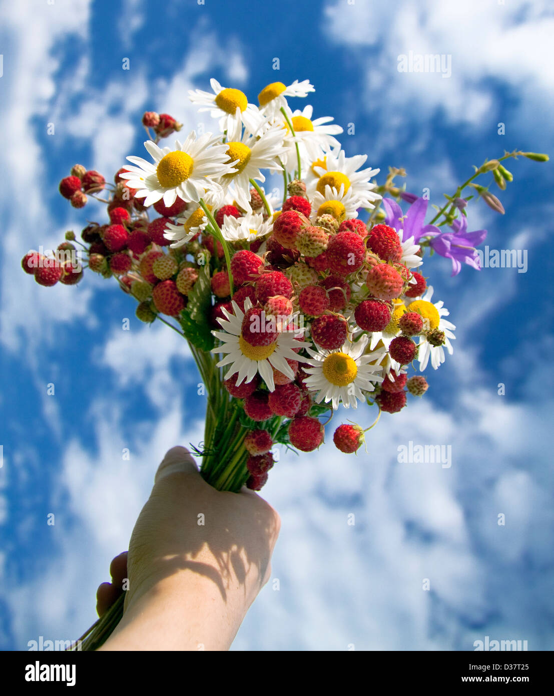 Bouquet From Berries Of Wild Strawberry And Field Camomiles Stock Photo Alamy