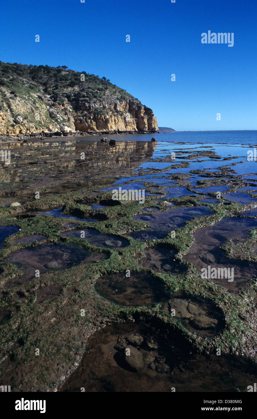 Inter-Tidal Shelf or Intertidal Zone at Low Tide with Rock Pools & Algae Saint Augustin Bay, Shore, Coast or Coastline Stock Photo