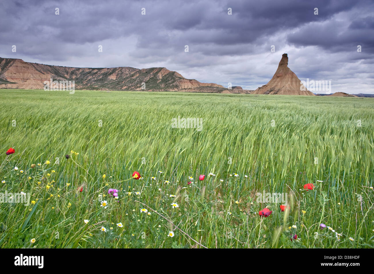 Tall grass blowing in wind - Stock Image