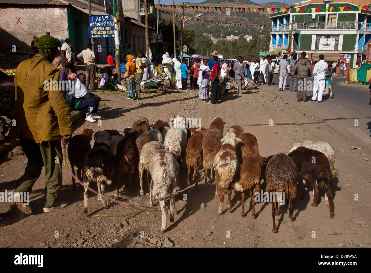 A farmer brings his sheep to the market in Gondar, Ethiopia - Stock Image