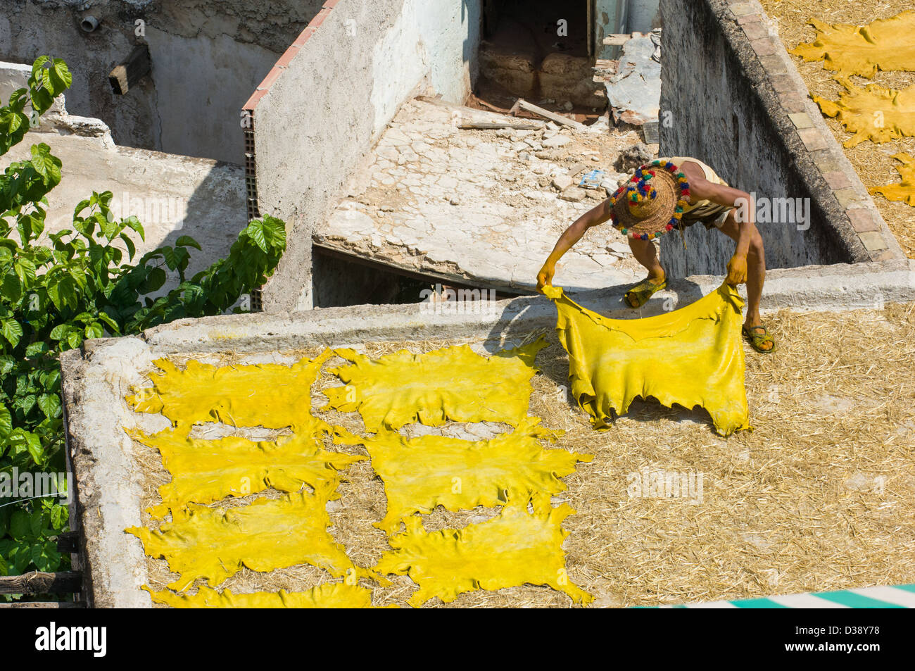 Worker laying out dyed yellow leather skins at the Chouara Tannery, Fes, Morocco - Stock Image