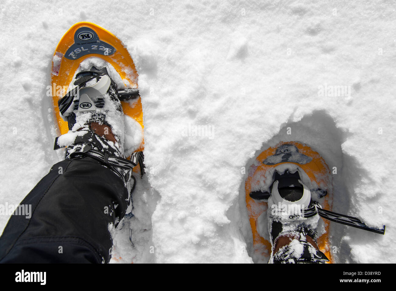 Close up of walker wearing snowshoes on feet while snowshoeing in deep powdery snow in winter - Stock Image