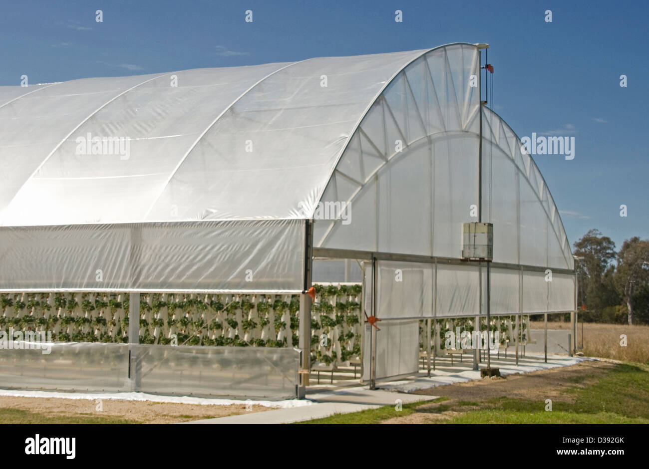 Large plastic covered tunnel greenhouse used in production of hydroponic strawberries - against a bright blue sky - Stock Image