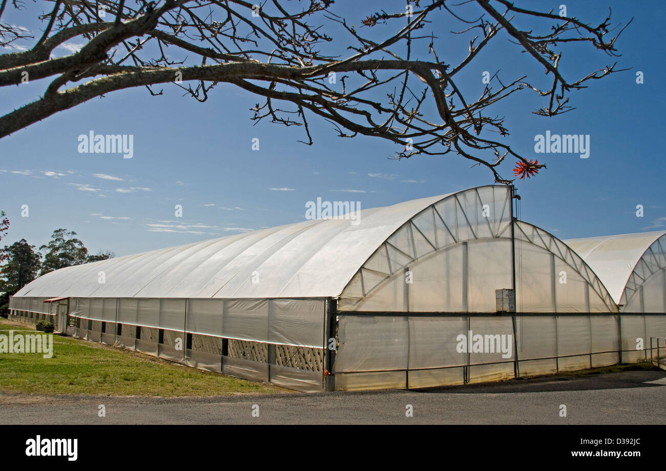 Large plastic covered tunnel greenhouse on a farm against a bright blue sky - Stock Image