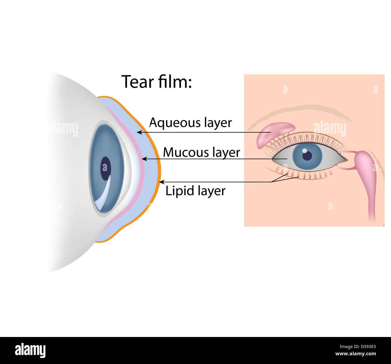 Tears chemistry - Stock Image
