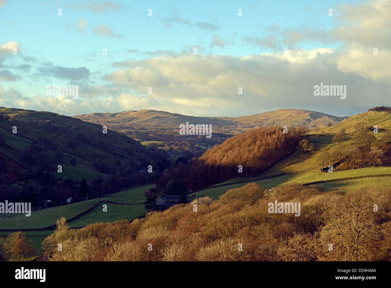 Sour Howes and Sallows from Craggy Plantation. Staveley, Lake District National Park, Cumbria, England, United Kingdom, - Stock Image