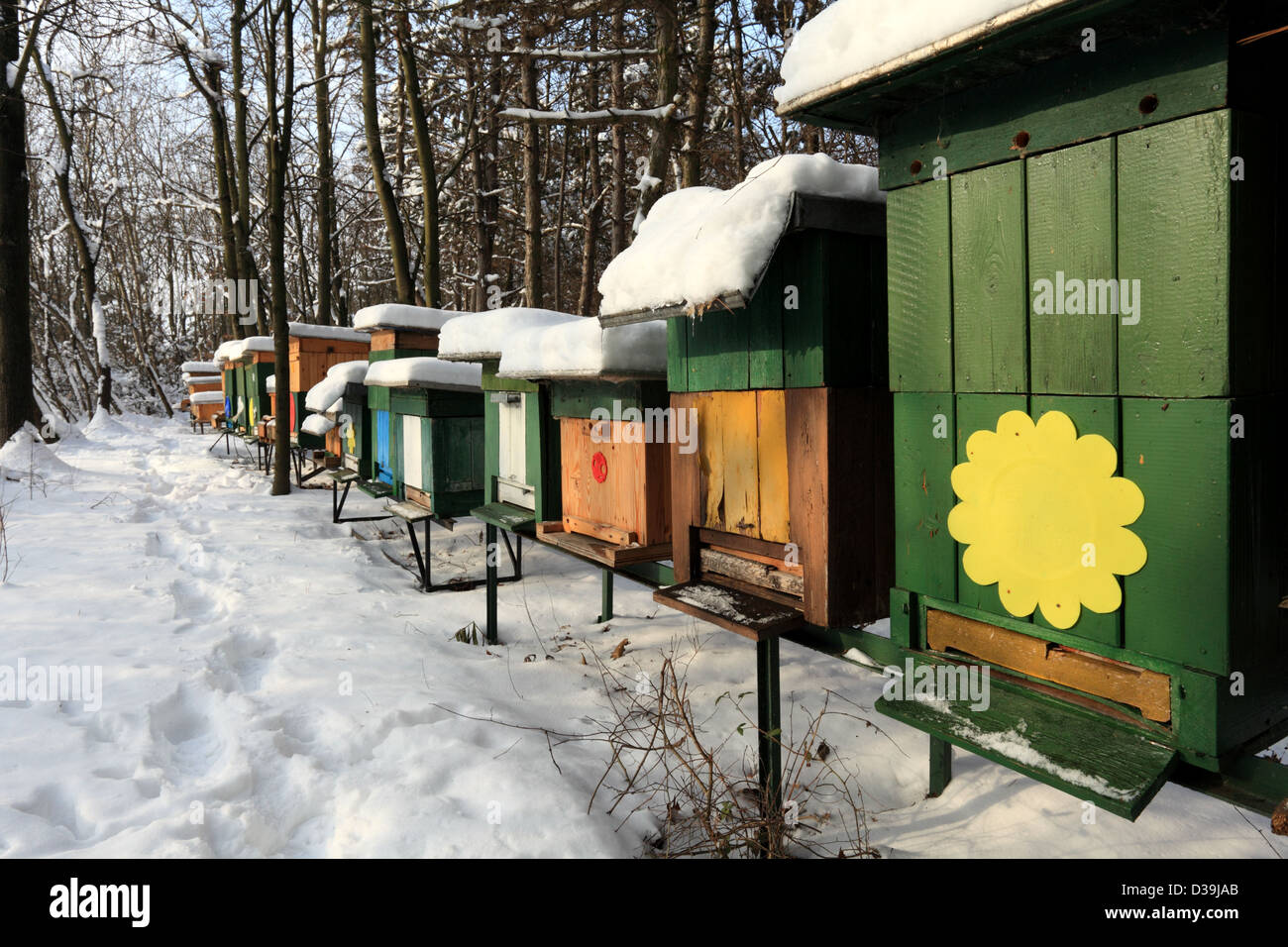 Apiary with wooden beehives on a sunny winter day, Male Karpaty, Slovakia. - Stock Image