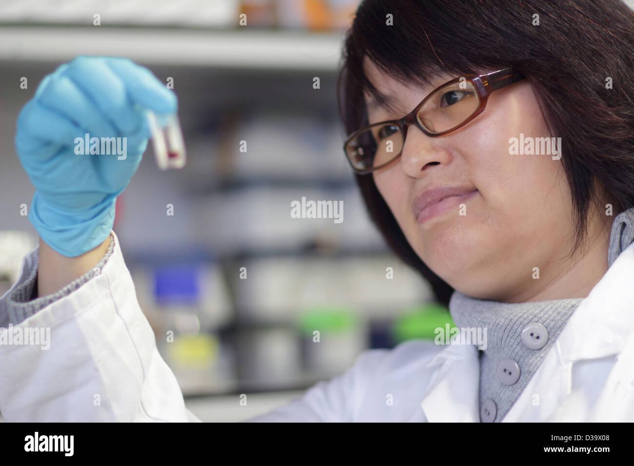 Scientist examining test tube in lab - Stock Image