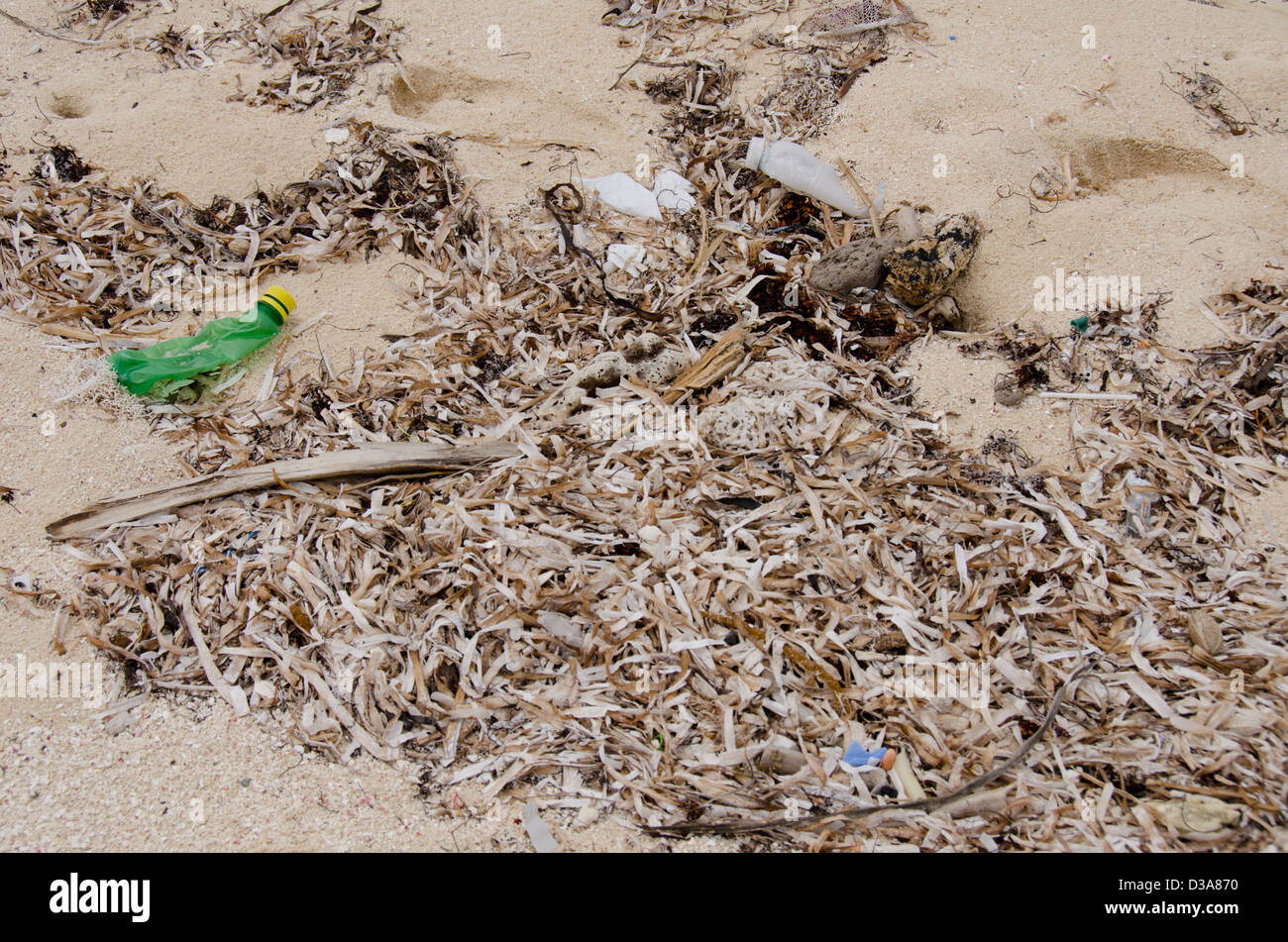 Belize, Caribbean Sea, Glover's Reef. Dirty polluted beach along the shore of Glover's Reef, a popular tourist - Stock Image