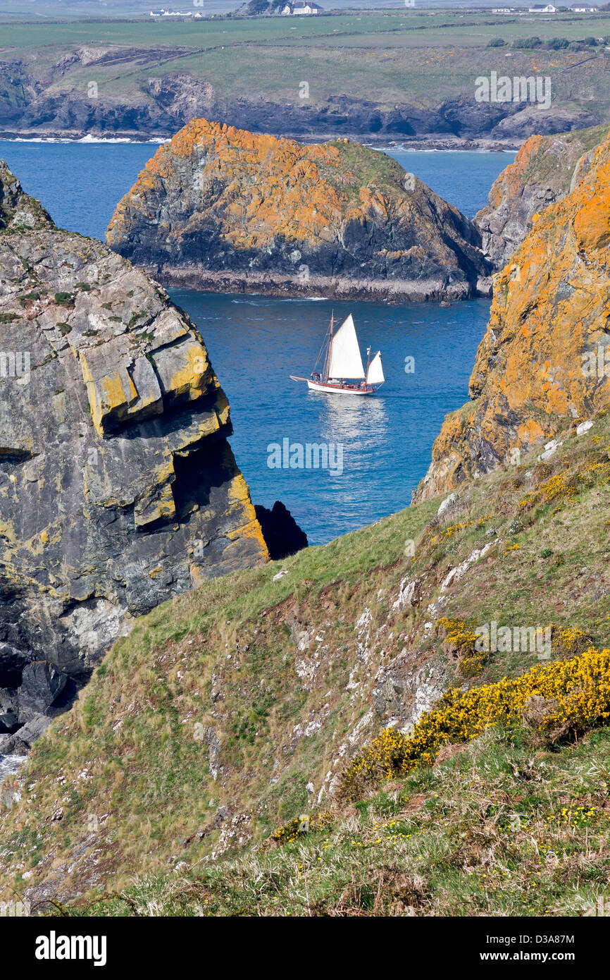 Classic Yacht leaves Mullion Harbour - Stock Image
