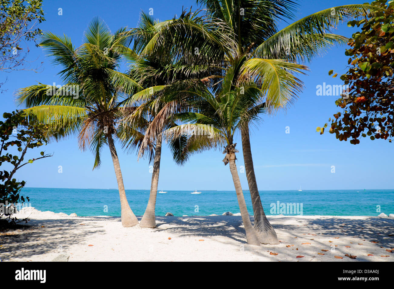 Two palm-trees on empty Zachary Taylor Beach, Key West, Florida - Stock Image