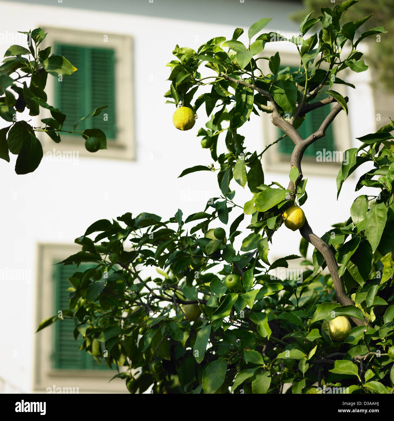 Fruit tree outdoors - Stock Image