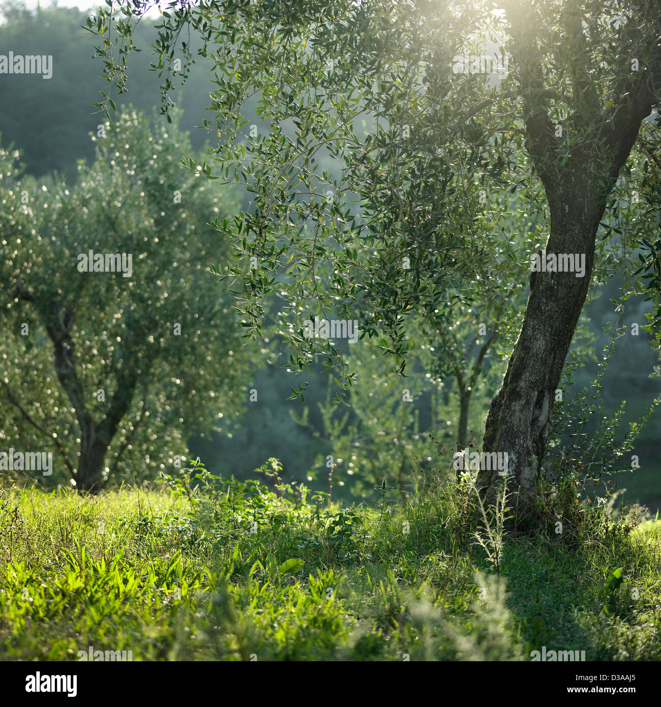Trees growing in meadow - Stock Image