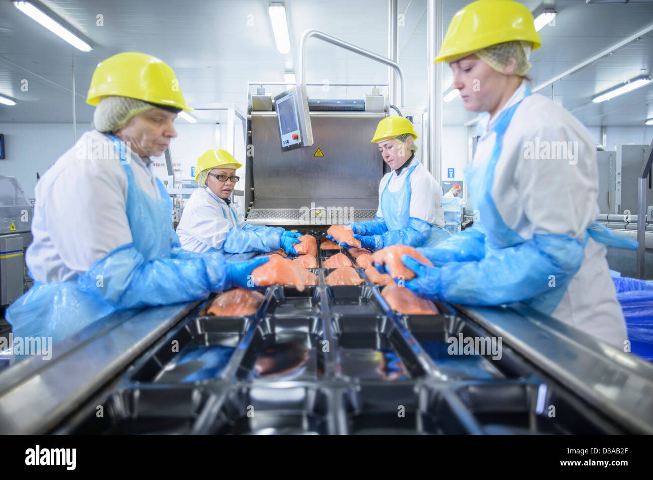 Workers packing salmon in food factory - Stock Image