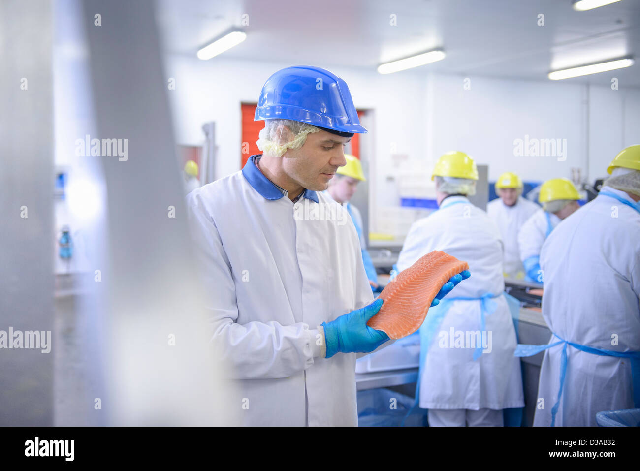 Worker inspecting salmon fillet in food factory - Stock Image