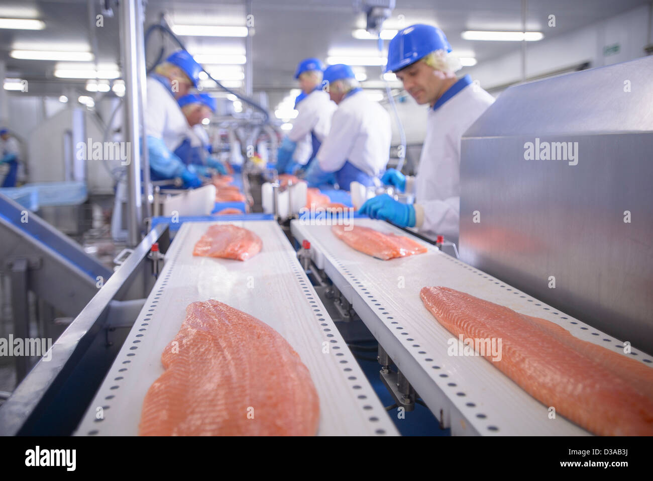 Workers in food factory preparing salmon fillets - Stock Image