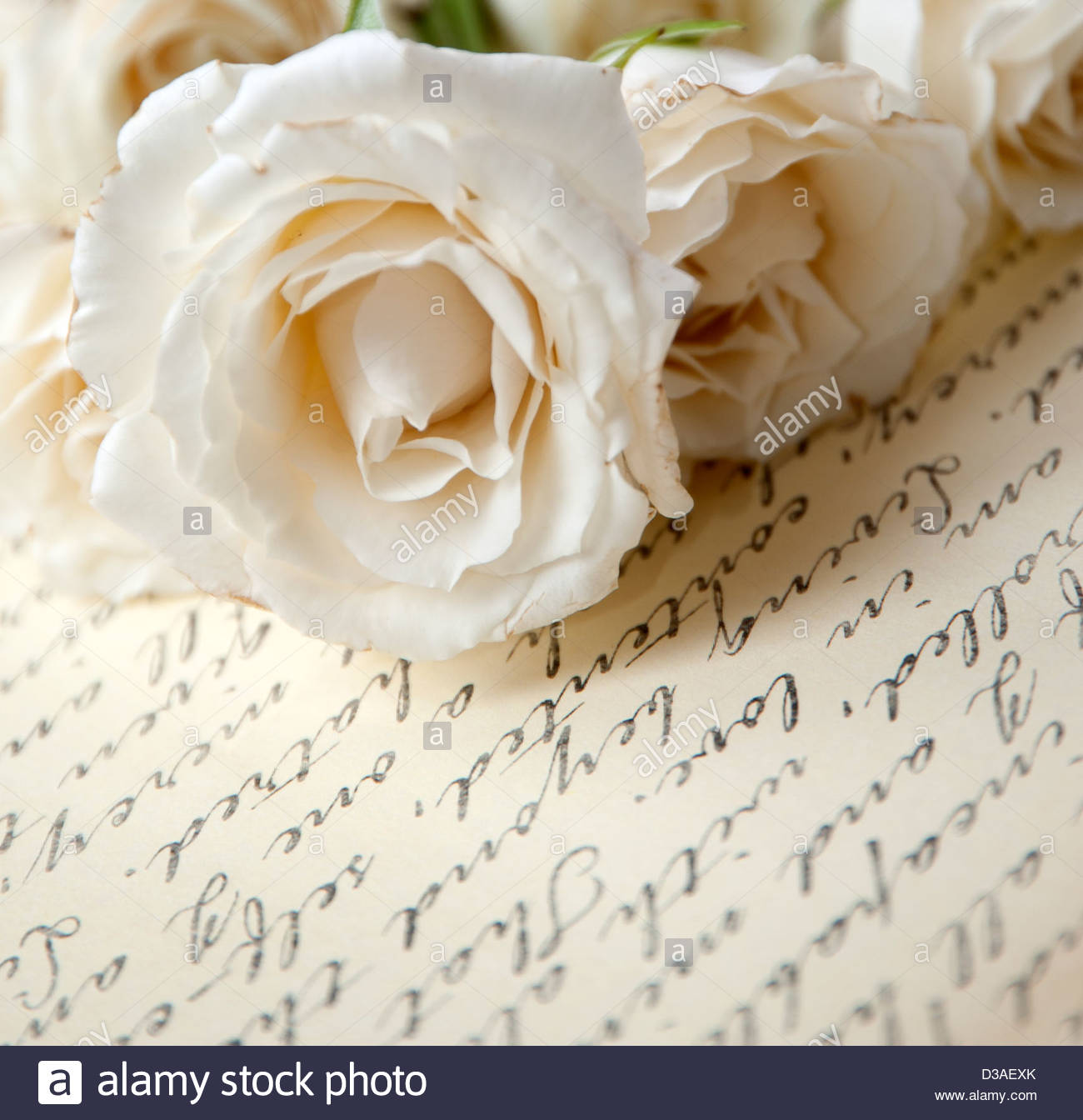 Love letter and roses - Stock Image