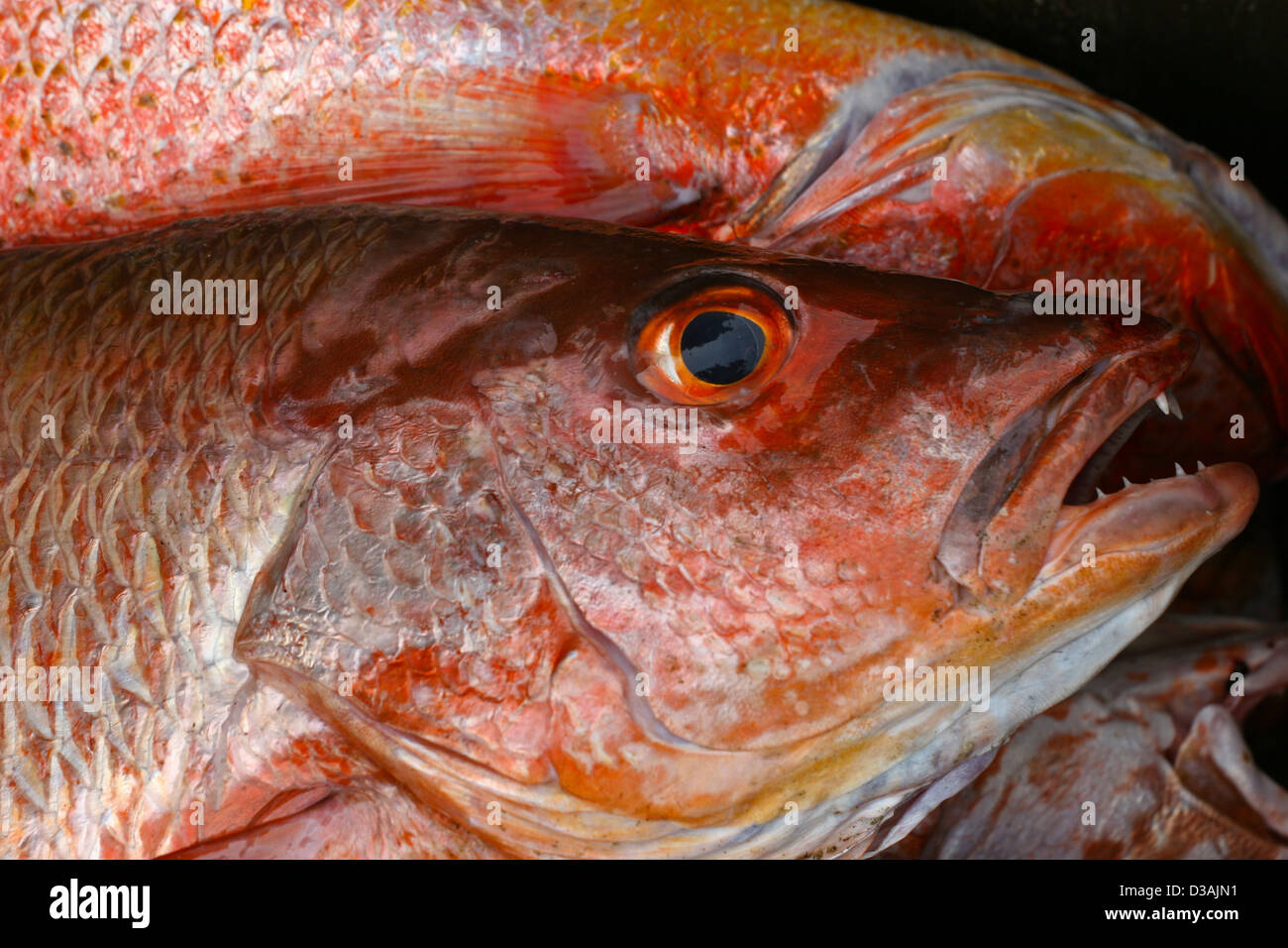 red snapper fish food good tasting beach market Mexico Stock Photo