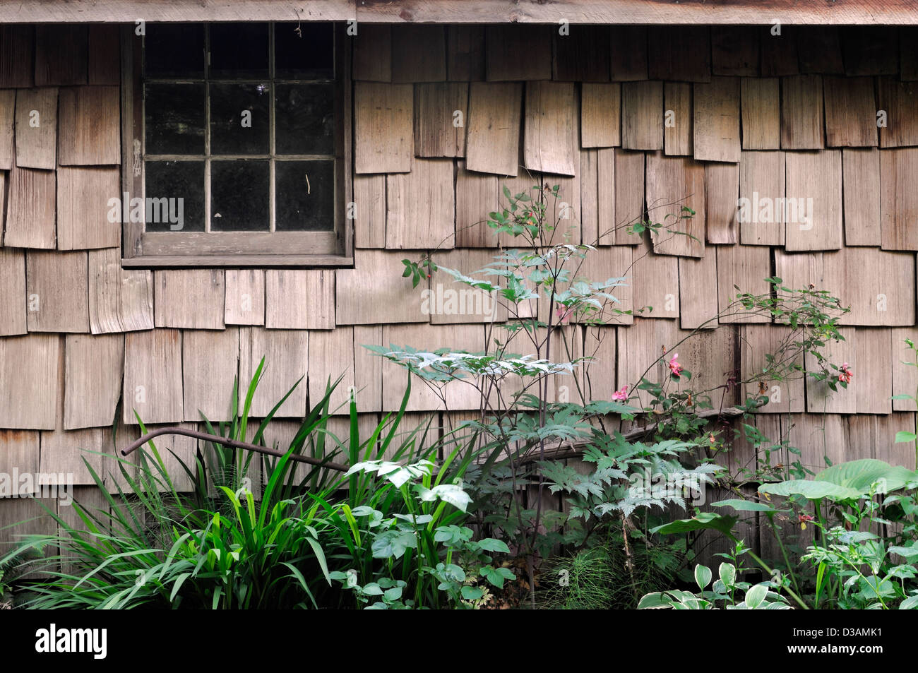 Bernardo O'Higgins Homestead Tofino botanical gardens vancouver island cabin - Stock Image