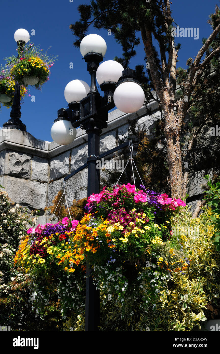 colourful colorful hanging baskets victoria inner harbour vancouver island flower flowers bloom blooming annuals - Stock Image