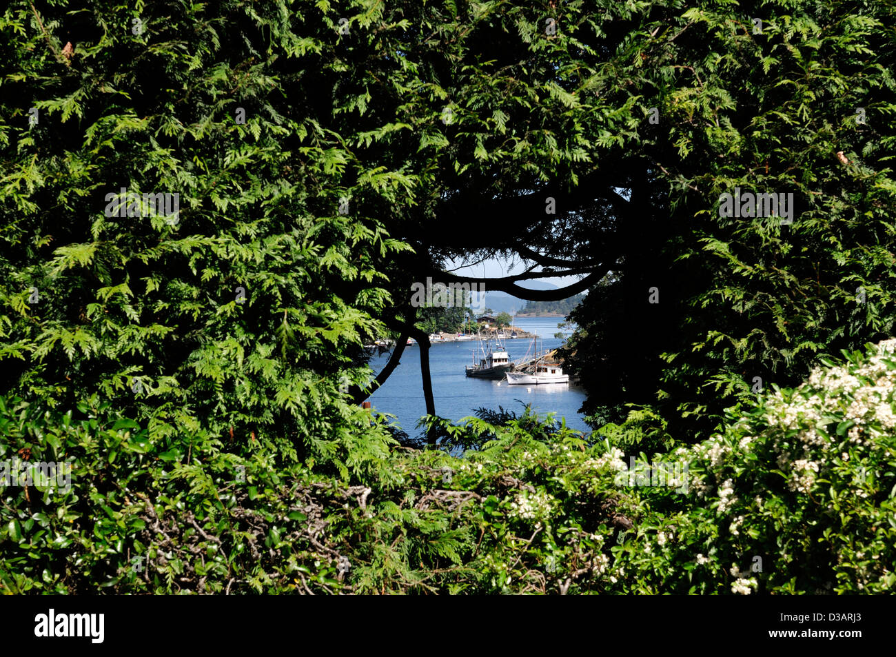 Clipped hedge window view through Brentwood bay japanese garden butchart gardens victoria vancouver island canada - Stock Image