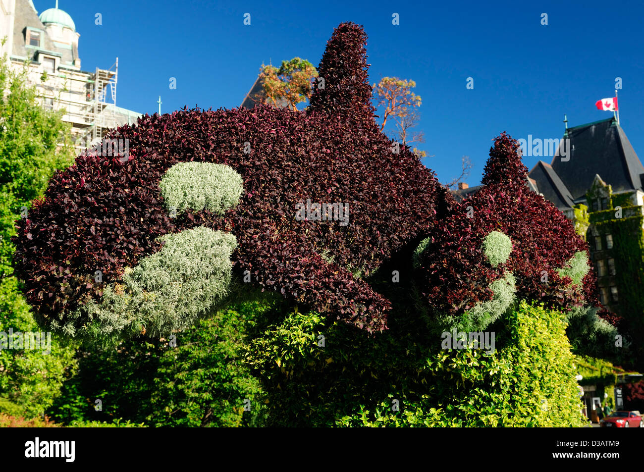 hedge hedging clip clipped shape shaped orca killer whale object garden gardening design victoria inner harbour - Stock Image