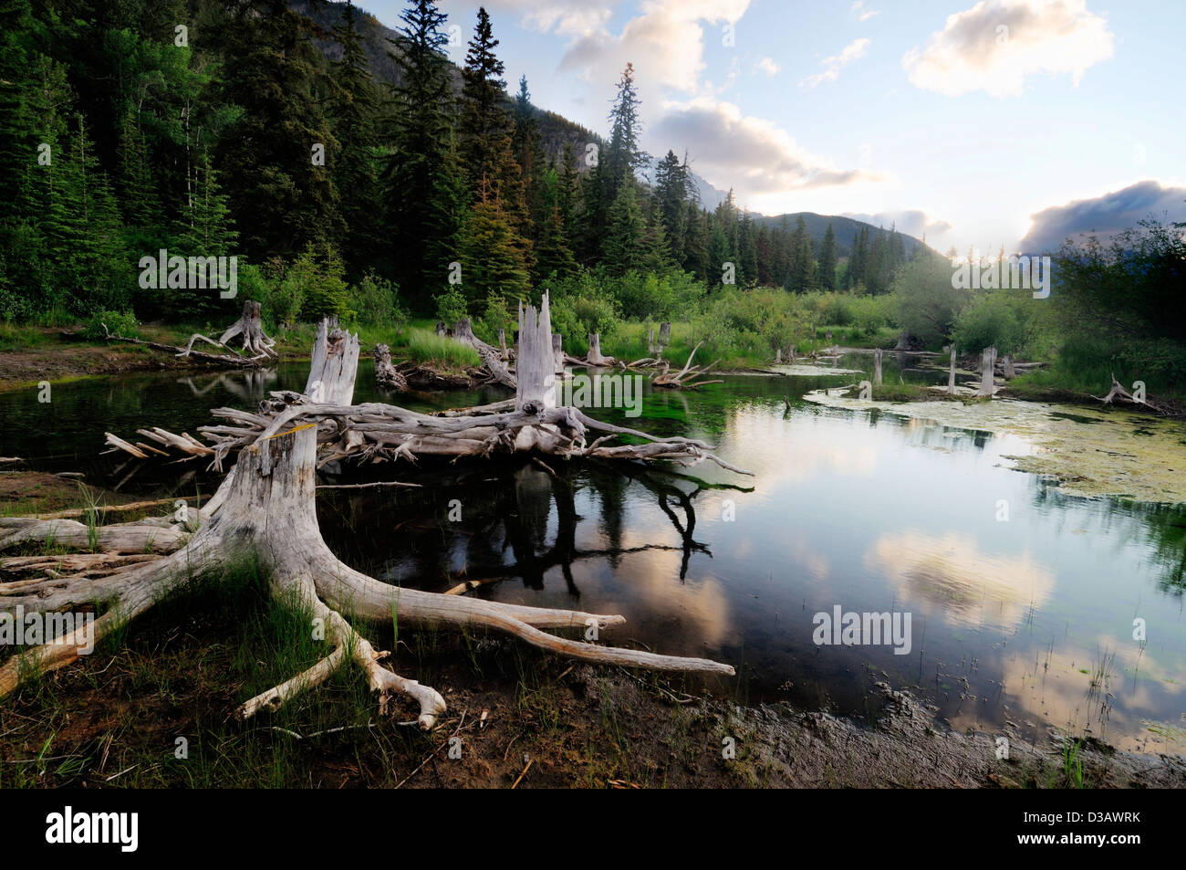 Vermillion Lakes Banff National Park Alberta Canada Reflection mountains clouds lake Mount Rundle tree stumps fire - Stock Image