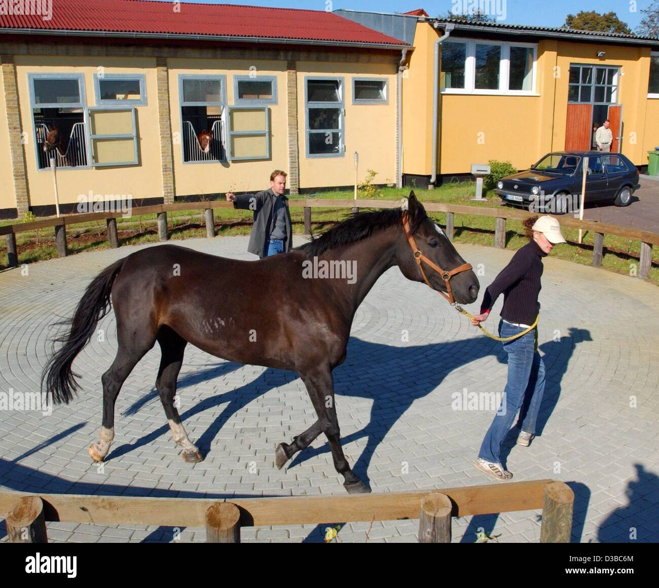 (dpa) - Veterinary assistant Mandy and one of the patients of the 'Horse Clinic Havelland' are doing the - Stock Image