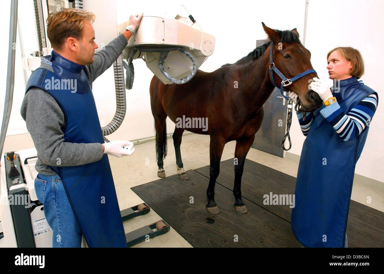 (dpa) - Veterinary Dirk Lebelt and his assistant Nadine are making a scintigram of a horse in the 'Horse Clinic - Stock Image