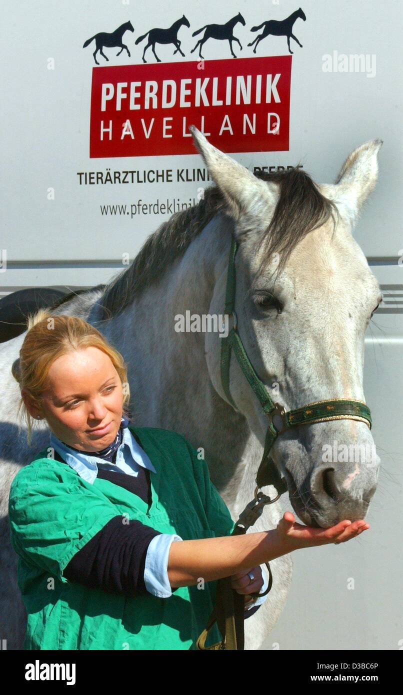 (dpa) - Veterinary assistant Tanja is touching one of the patients of the 'Horse Clinic Havelland', Brielow, - Stock Image