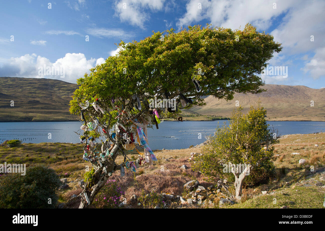 Fairy tree adorned with ribbons, Killary Harbour, Connemara, County Galway, Ireland. - Stock Image