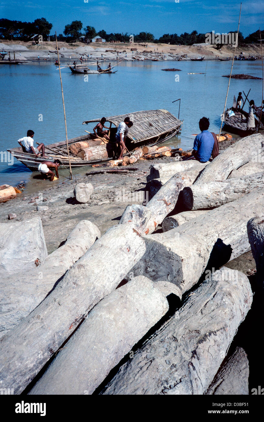 Hardwood timber brought down from the India / Burma border, possibly illegally felled. Tangail District, Bangladesh - Stock Image