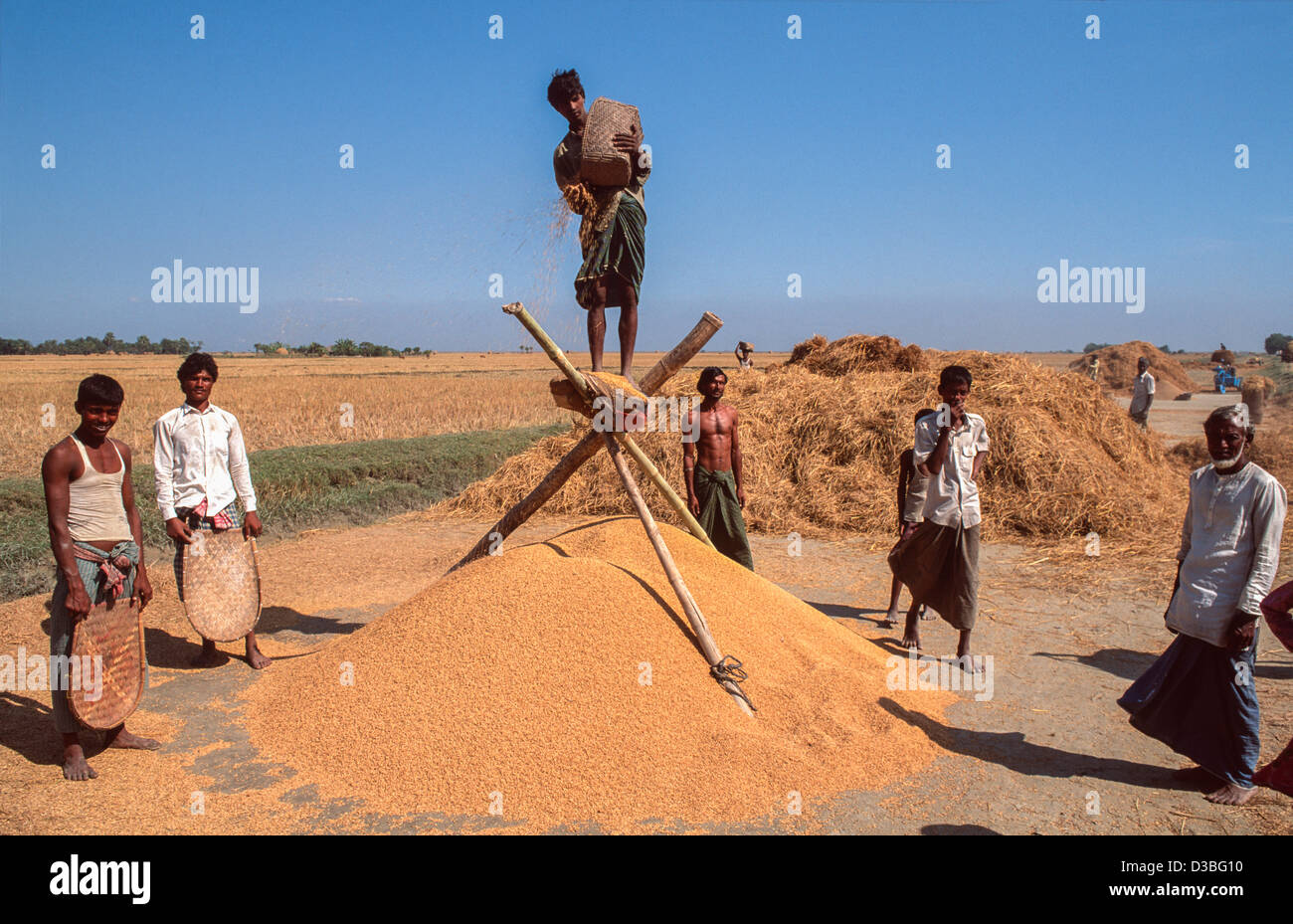 Standing high to catch the breeze to separate the rice from the husks. Sandwip Isle, Bay of Bengal, Bangladesh - Stock Image
