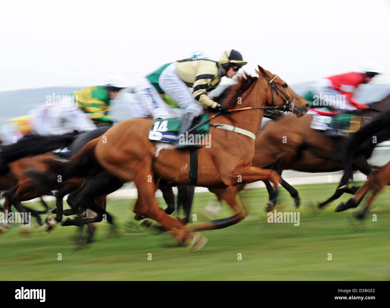 Jockeys ride their horses in front of the Grandstand during The Cheltenham Festival an annual horse racing event Stock Photo