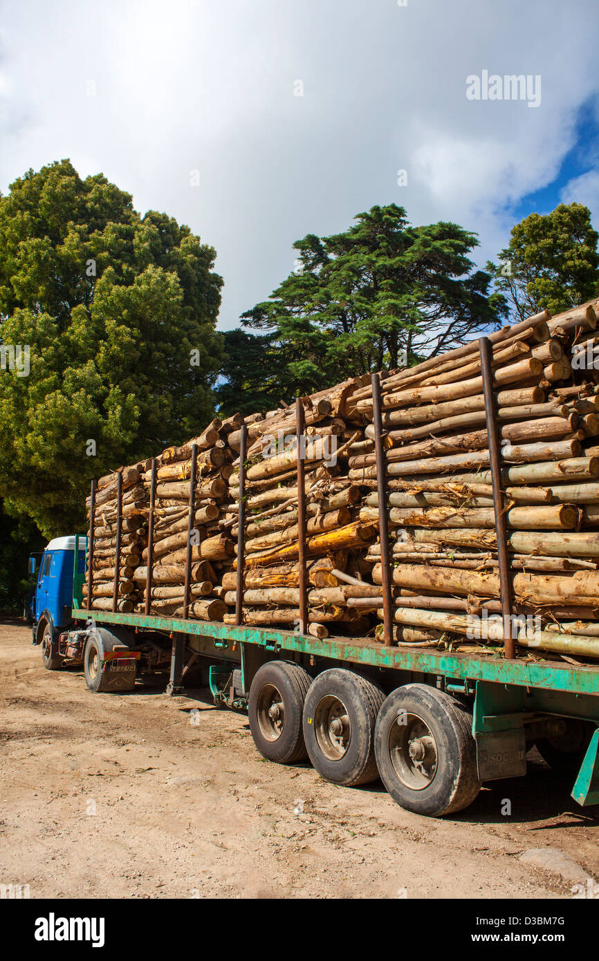 Truck transporting timber. - Stock Image