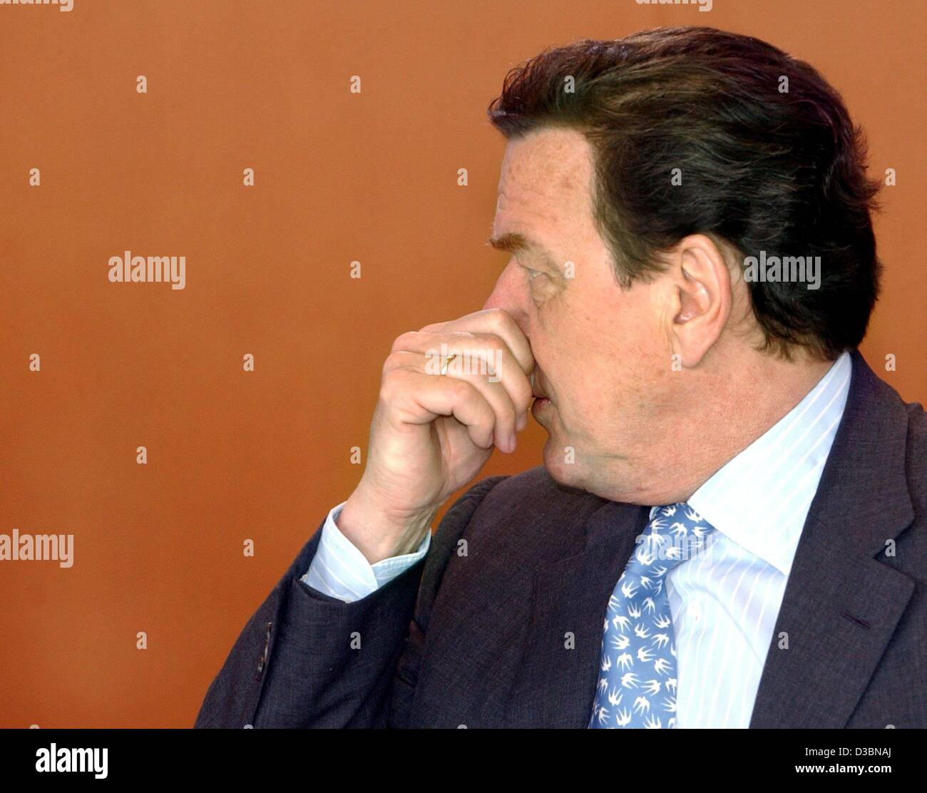 (dpa) - German Chancellor Gerhard Schroeder touches his nose ahead of a cabinet meeting in Berlin, 9 April 2003. - Stock Image