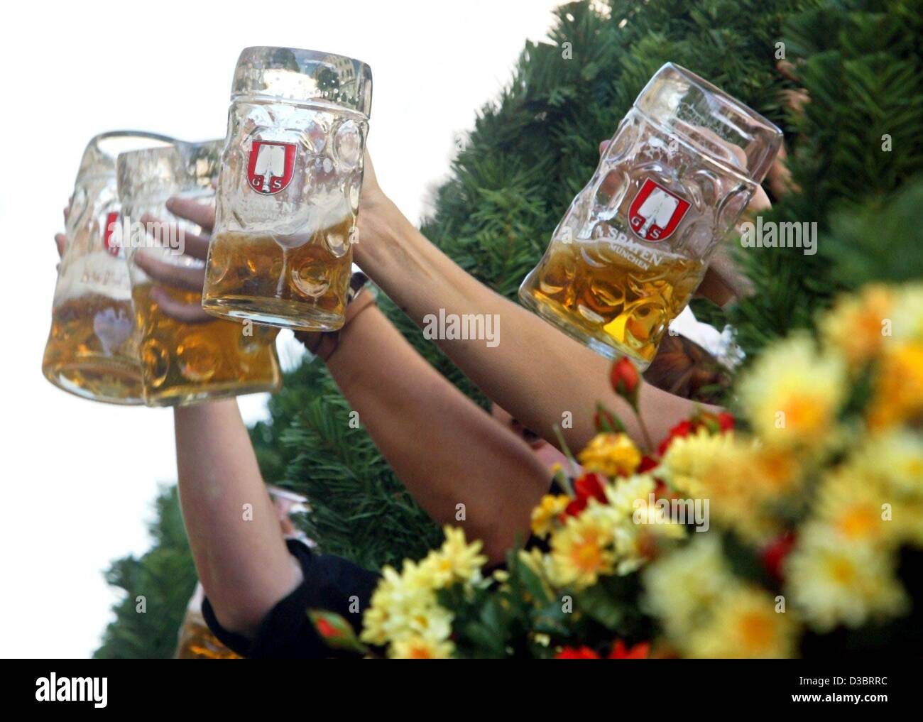 (dpa) - People clink their glasses at the Oktober Fest in Munich, 20 September 2003. A one-litre stein of beer costs - Stock Image