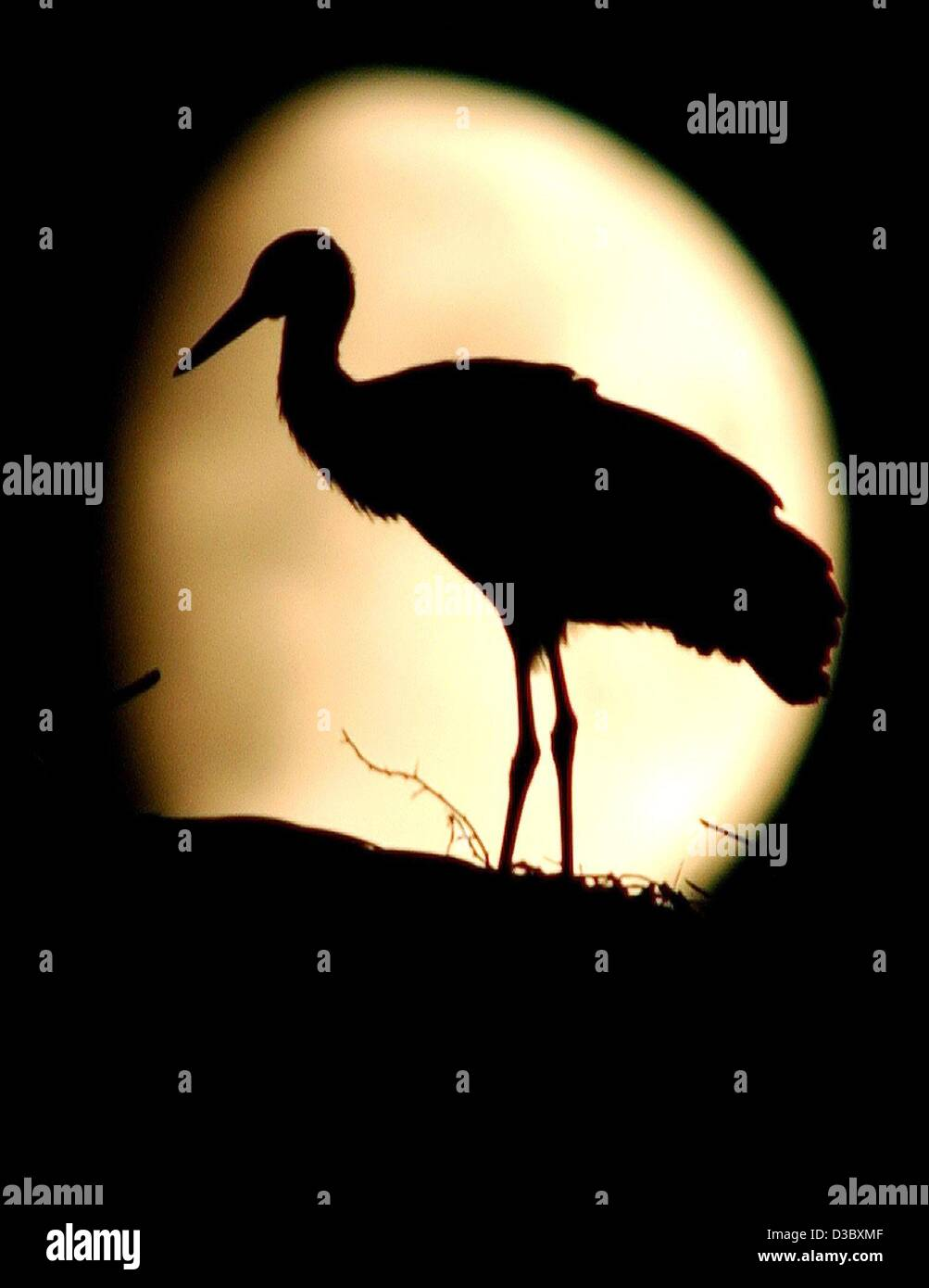 (dpa) - The silhouette of a young stork appears in front of the beaming moon in Sieversdorf, Germany, 7 August 2003. - Stock Image