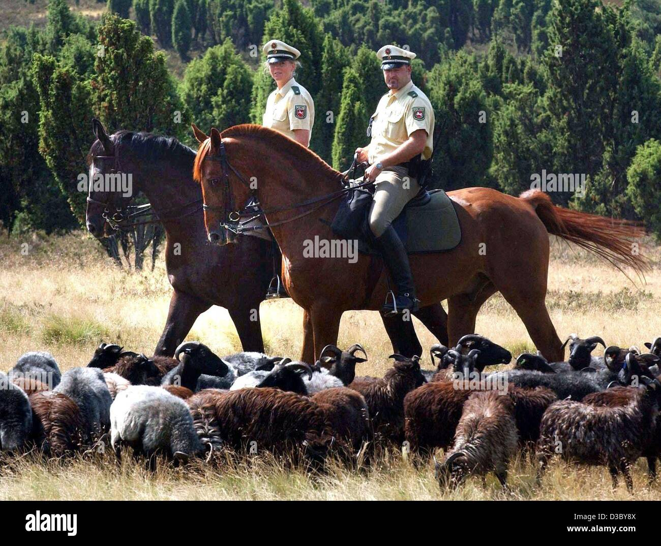 how to become a mounted police