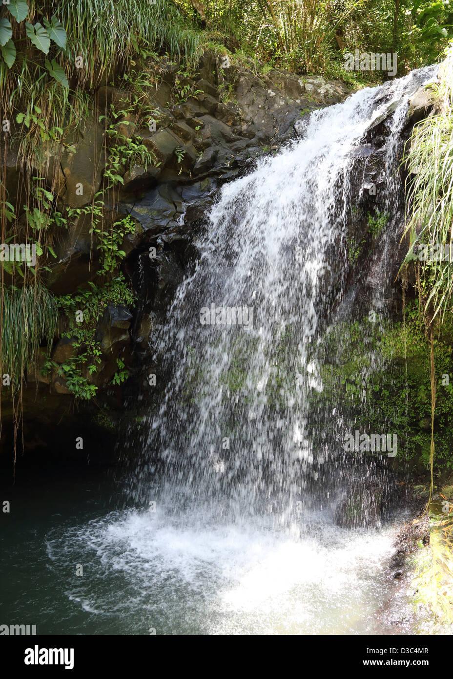 ANNANDALE FALLS,GRAND ETANG FOREST RESERVE,GRENADA, Stock Photo