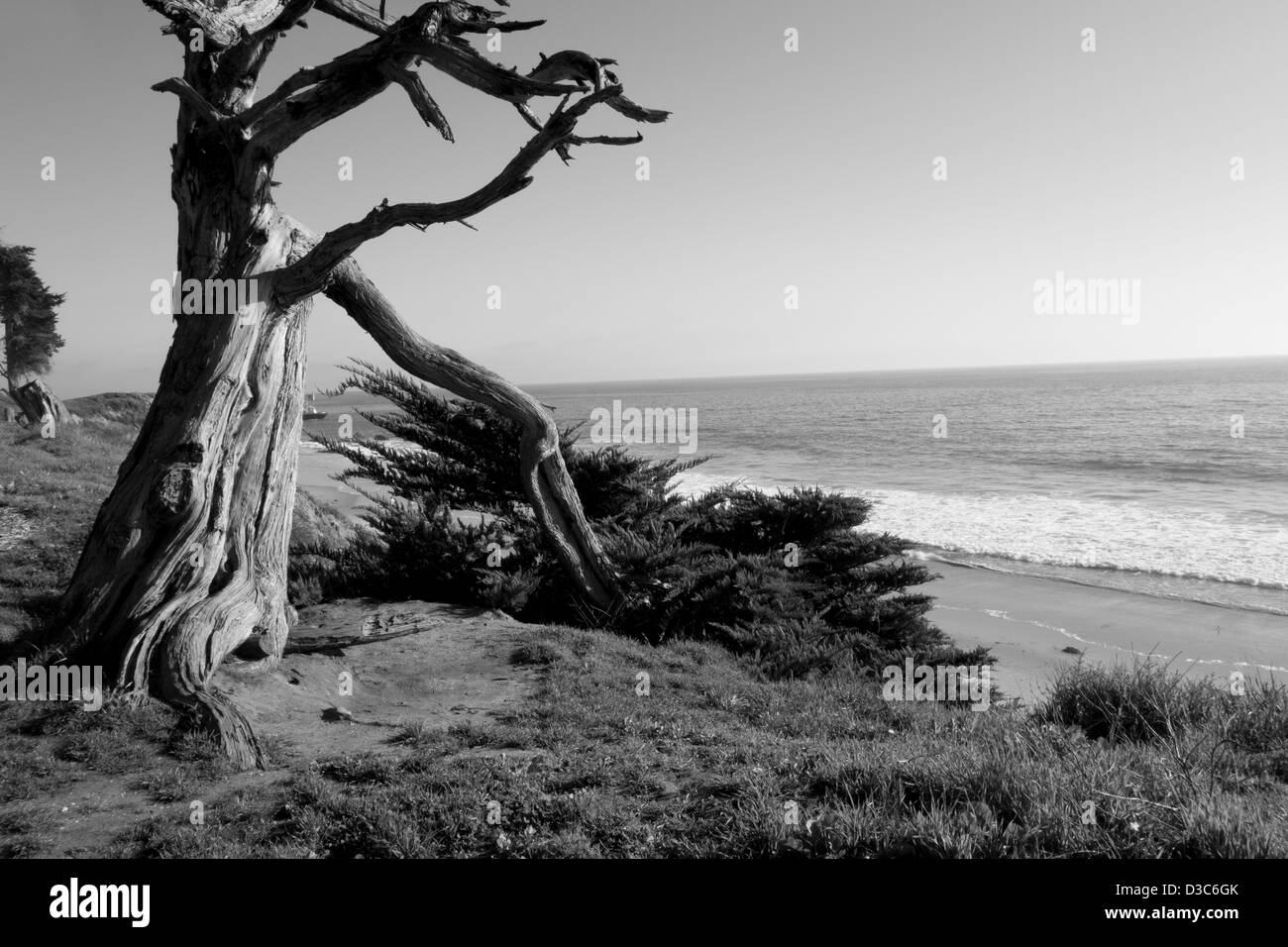 dead tree on bluffs above beach overlooking Pacific Ocean near Carpinteria California USA - Stock Image