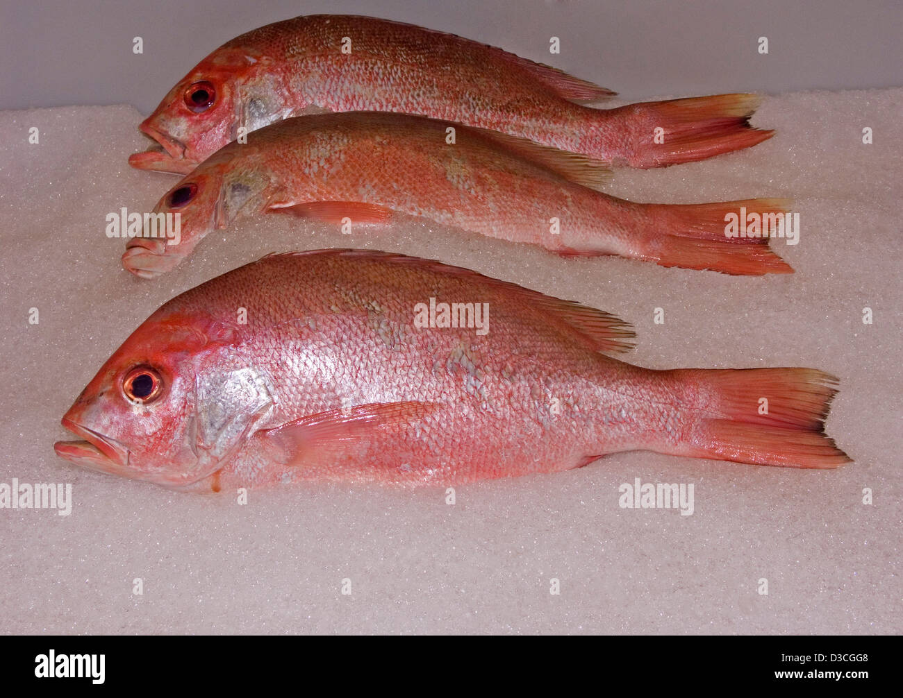 Three bright red fish - Australian snapper - on ice in a supermarket ...