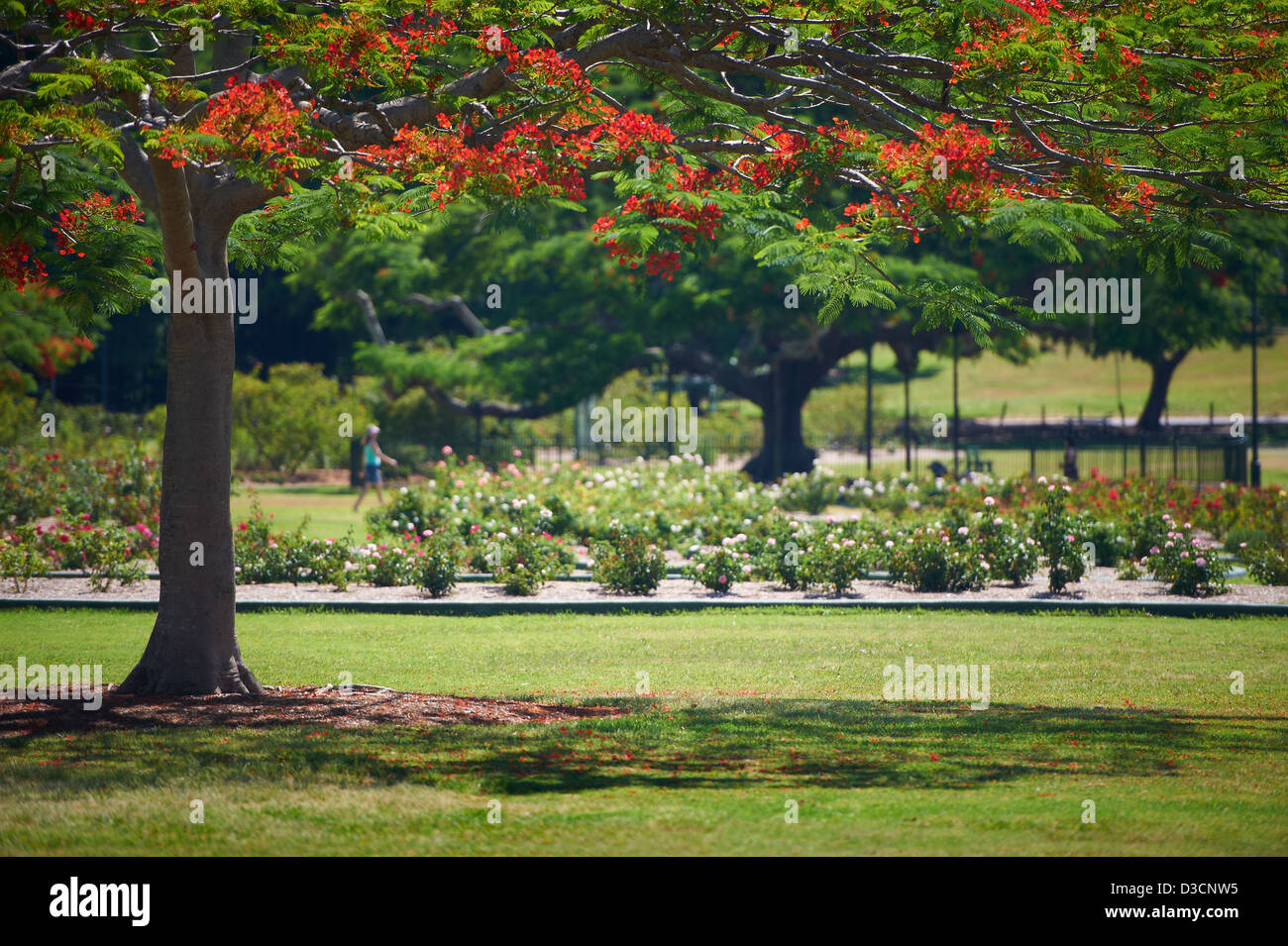 New Farm Park, QLD Australia Stock Photo