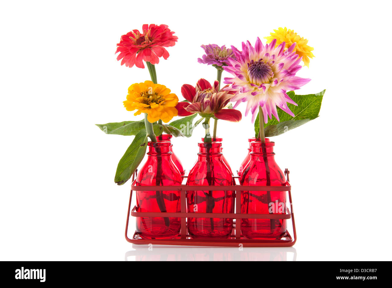 colorful Zinnia and Dahlia flowers in red glass bottles in rack ...