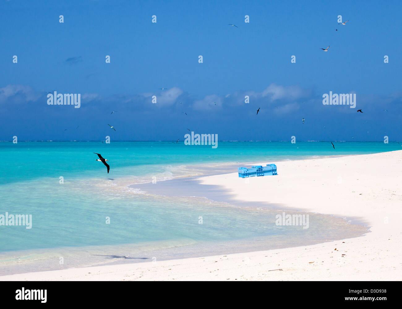 Laysan Albatross (Phoebastria immutabilis) flying over lagoon past plastic marine debris on the beach - Stock Image